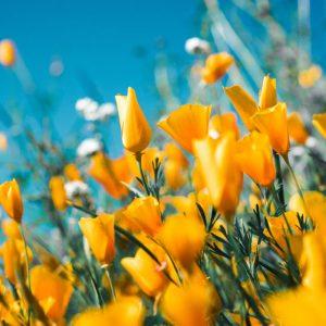 5 Summer Flower-Growing Tips