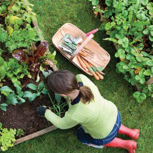 Raising the Bar with Garden Beds