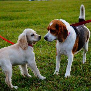 Bear Creek Dog Park is Now Open