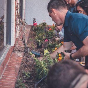Essential Spring Gardening Tips